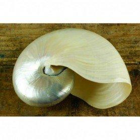 Nautilus nácar caracola marina