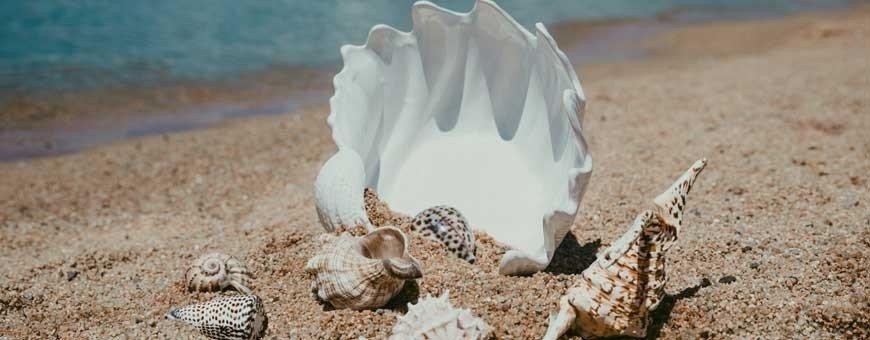 Conchas de mar, caracolas, estrellas de mar, vieiras